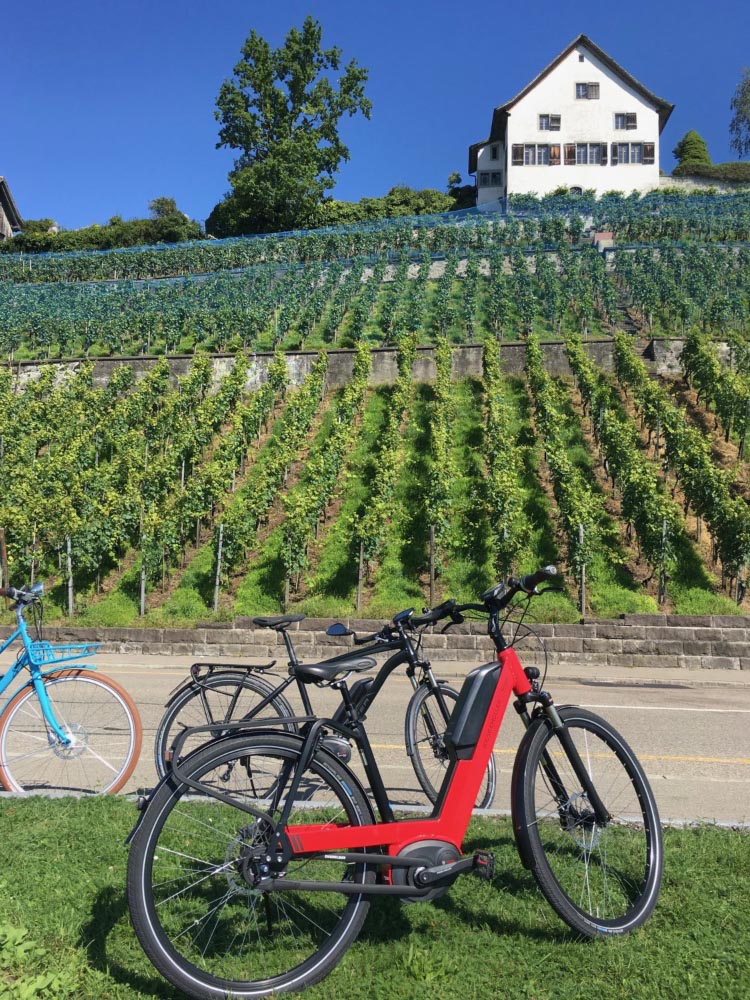 This side of Zurich Lake has many beautiful vineyards – I keep thinking these must be the most expensive vine patches in the whole of Europe